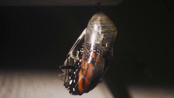 IMAX Flight of the Butterflies - Trailer